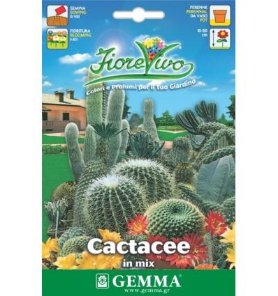 CACTACEE