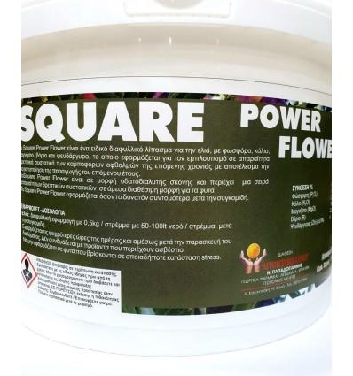 SQUARE POWER FLOWER 1 Kg