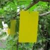 Quality Εντομοπαγίδες Σετ 10 τμχ 24x17 cm Κίτρινο