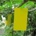 BIOBEST 20 κιτρινες κολλητικές χρωμοπαγίδες
